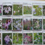 2. Vaste planten