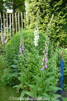digitalis gemengd