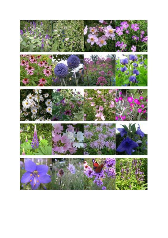 zadenpakket-roze-paars-blauw